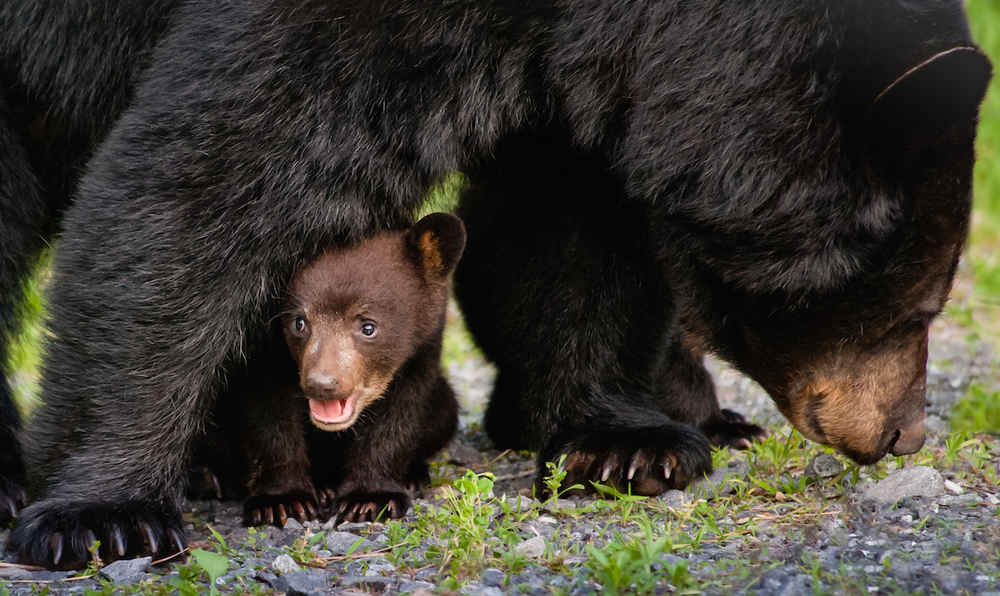 Men Who Killed Sleeping Bear Family Just Got Punished