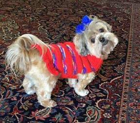 Dog dressed up in cute outfit