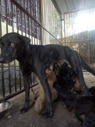 tar puppies