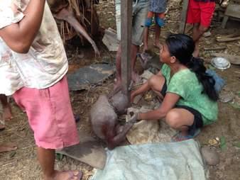 People helping starving orangutan