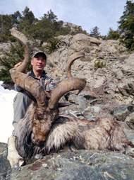 goat trophy hunt pakistan