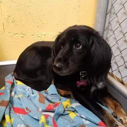 Sad looking dog in a shelter