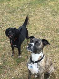 Two dogs looking expectantly for a toy to be thrown