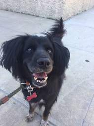 Smiling dog out for a walk