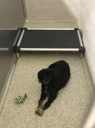 Black dog looking sad in shelter kennel