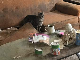 Dilapidated abandoned house where dozens of cats were found