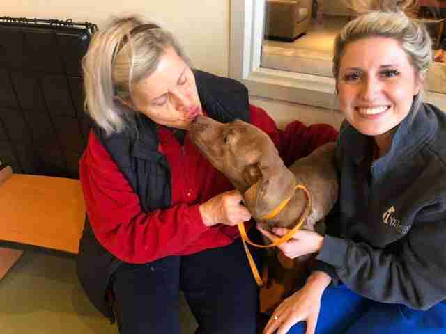 Stray dog saved from cold kisses foster mom