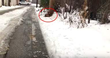 Stray dog out in the snow asking for help