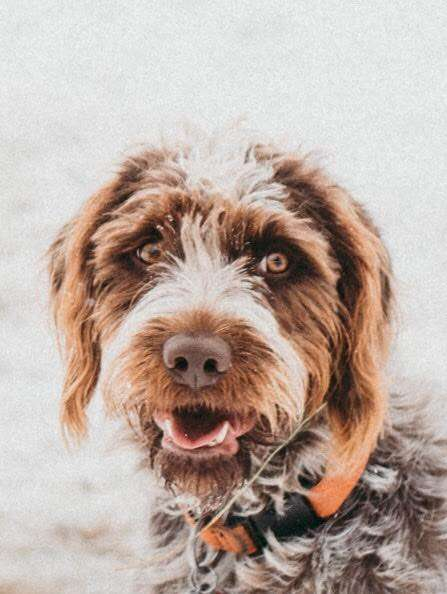 Lost dog trapped on icy pond in Bozeman, Montana