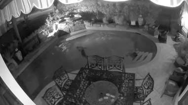Raccoons in security cam footage swimming in man's pool