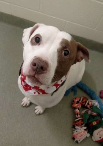 Capone looks up at the shelter staff