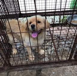 dog rescue south korea