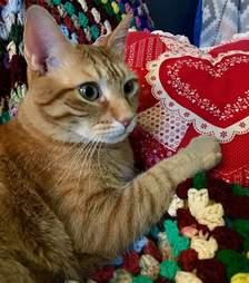 cat rescue adopt