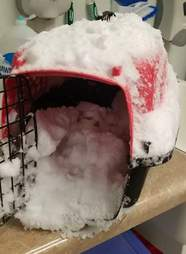cat rescue snow