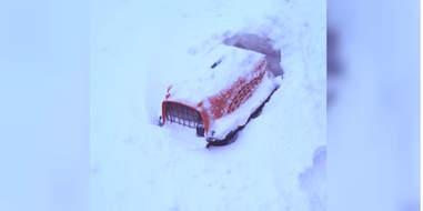 cat rescue snow