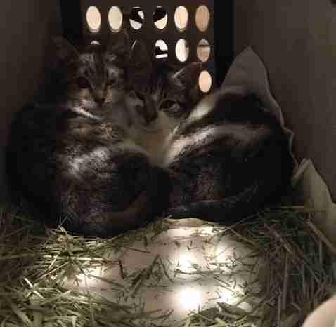 A litter of stray kittens rescued in Brooklyn