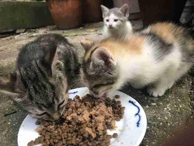 Stray cats enjoying some food