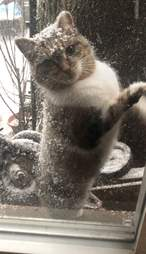 Chunk Chunk the neighborhood cat begs to come inside