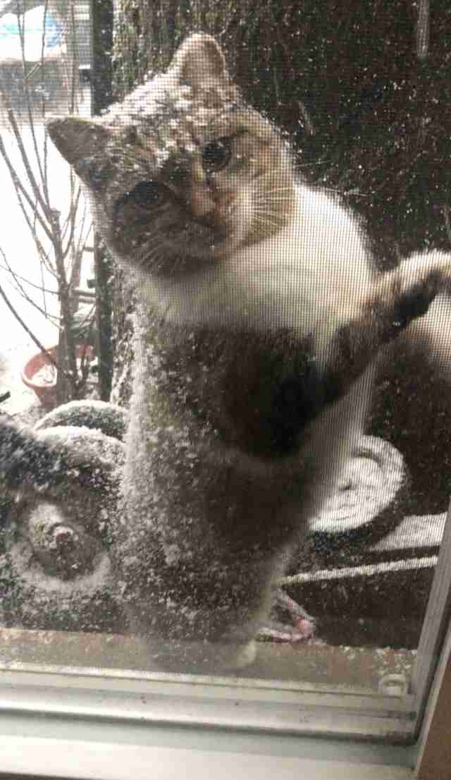 Stray Cat Shows Up Outside Guy S Window In Polar Vortex