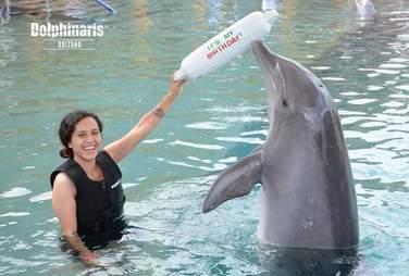 dolphin death captivity