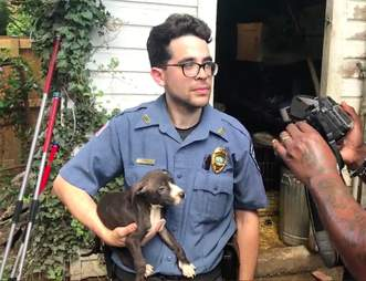dog rescue fighting