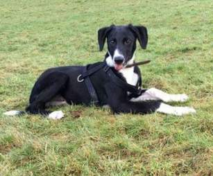 """Hector, """"Britain's Loneliest Dog"""" at the shelter"""
