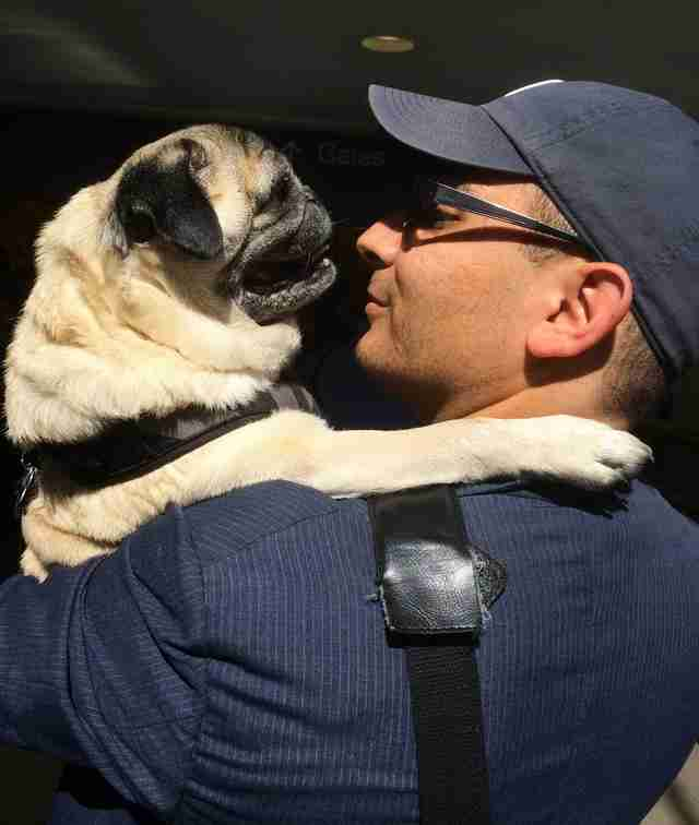 Shorty the senior pug hugs his dad, Marc Peralta