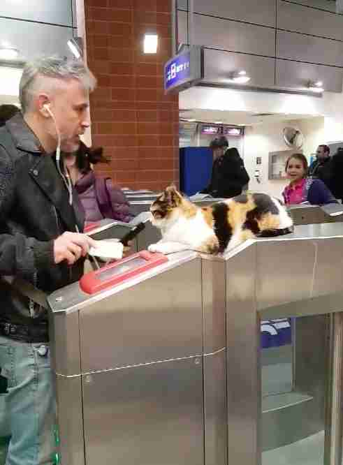 Train station cat in Israel from viral video