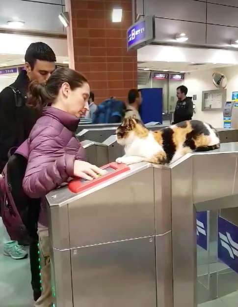 Cat Greets Commuters at Train Station