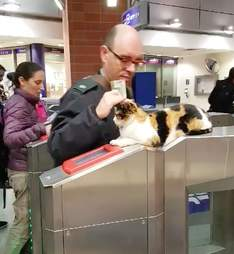 Street cat getting pet at local station in Israel