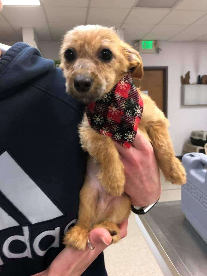 louie puppy rescued from bridge