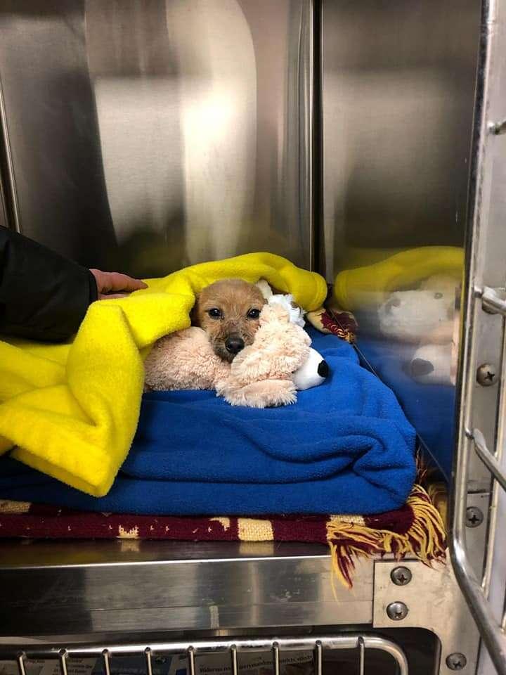 griffith animal hospital puppy