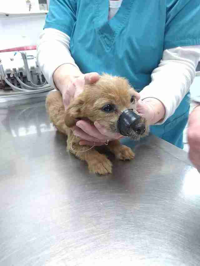griffith indiana puppy muzzle taped shut