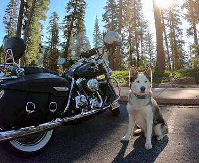 Husky with motorcycle