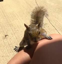 squirrel friend woman florida