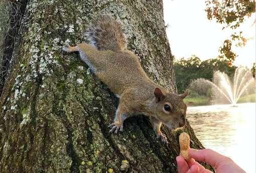 squirrel friend woman