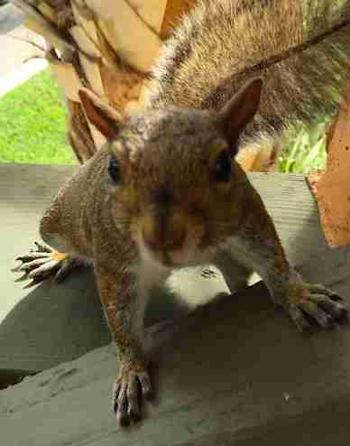 squirrel friend woman florida