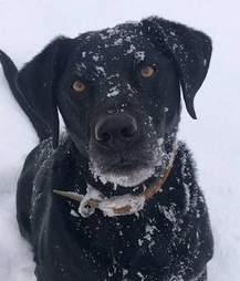 dog defends home thief