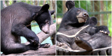moon bear rescue laos