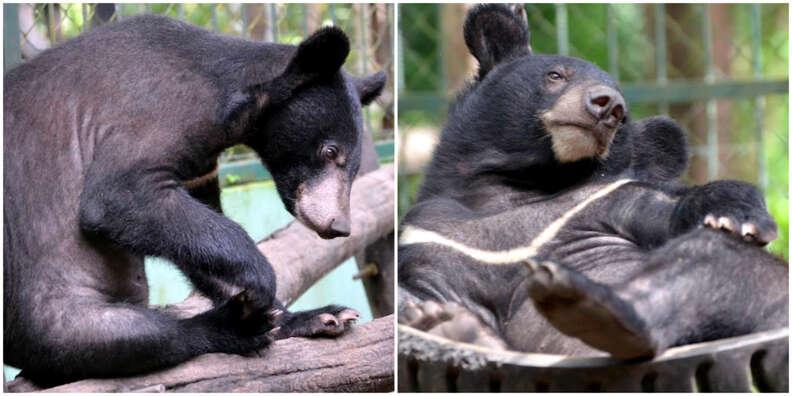 moon bear rescue laos