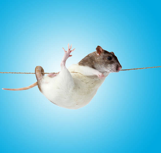 Rodents in Space Will Show How Genes Are Affected by Microgravity