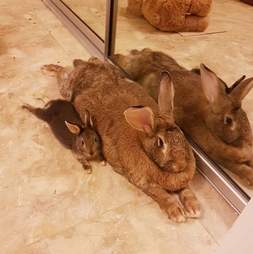 rabbit boyfriend tiny