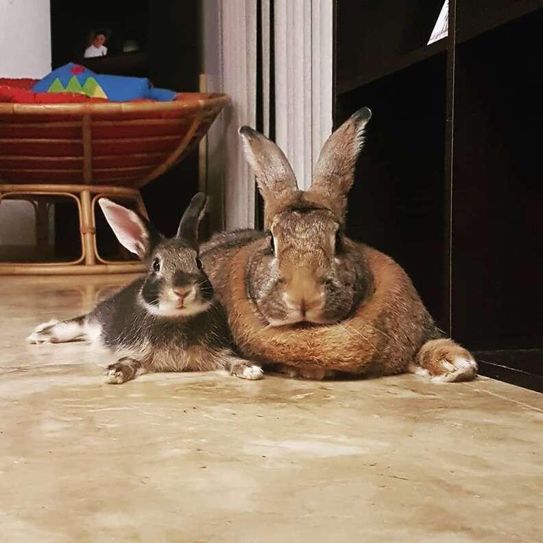 rabbit couple adorable