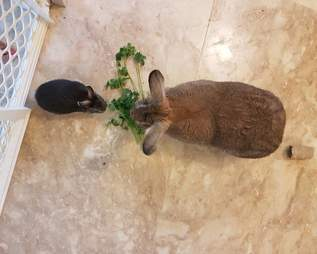 rabbit couple adorable