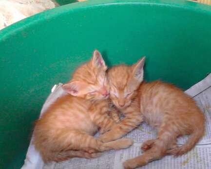 Kittens saved in Venezuela