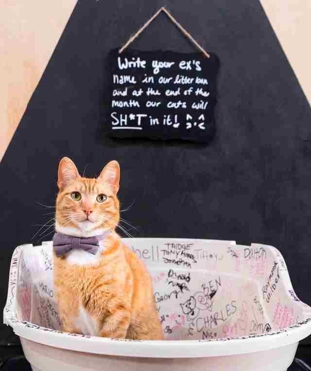 cat cafe valentine's day