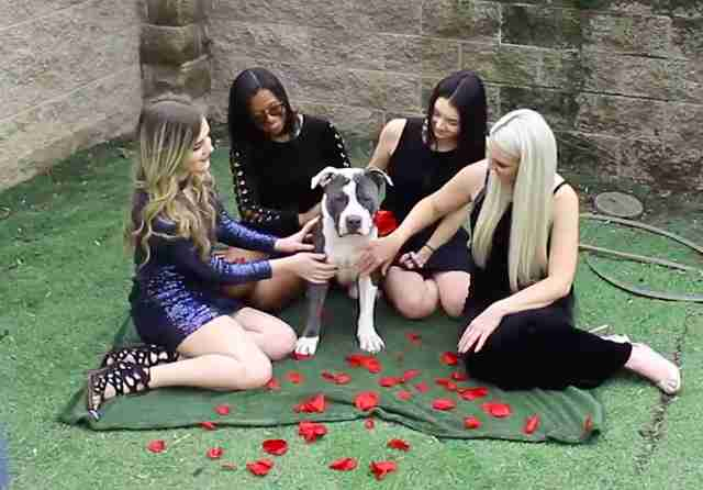 dog rescue pit bull the bachelor