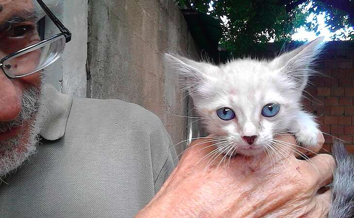 Venezuela cat sanctuary