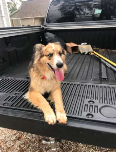 Best dog day ever for random neighborhood pup