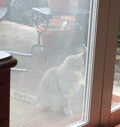 Cat waits at window of her dog friend